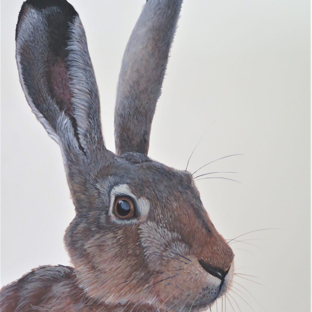 Ferri Hare